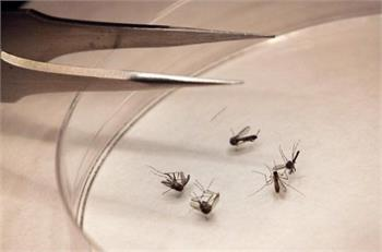 Ontario's West Nile cases continue to rise